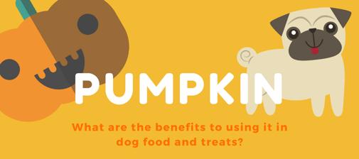 Fruitables_Pumpkin_Benefits_Infographic_Header.png